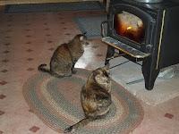 Kitty TV